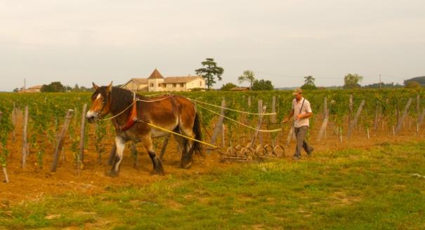horseploughing