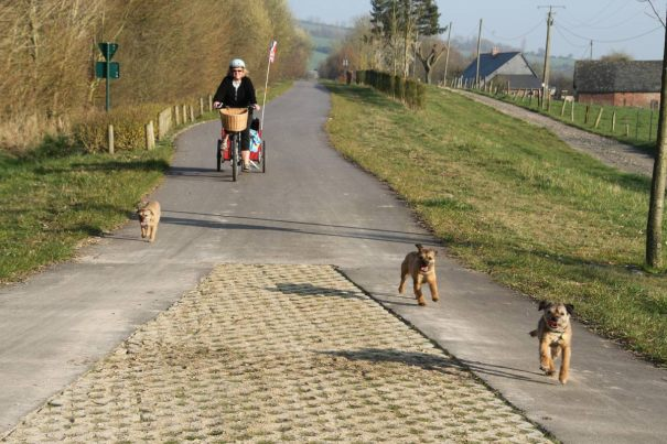 cyclingdogs