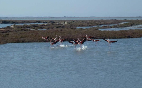 flamingos copy