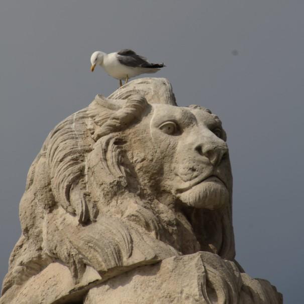 lionseagull