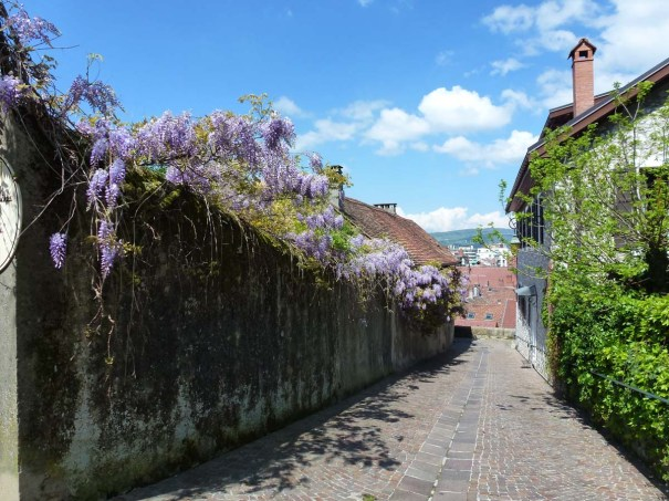 Wisteria Lined Lane by the Chateau