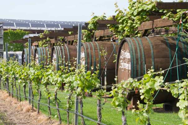 Winery Close to the Stellplatz.
