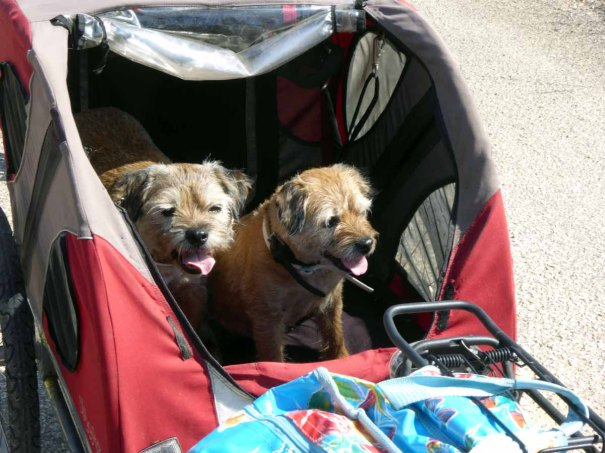 The Torpid Terriers