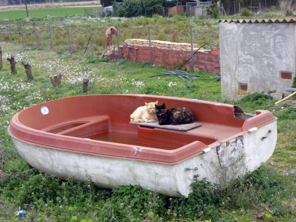 Two Cats in a Boat