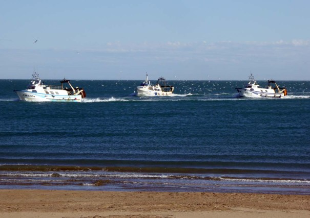 The Fishing Fleet