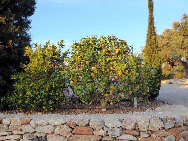 Citrus World