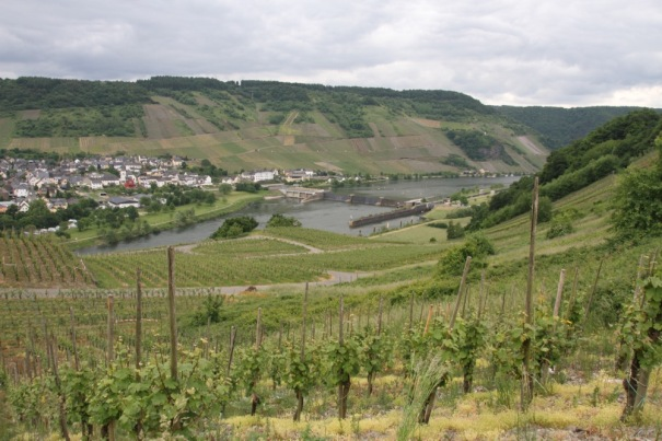 The next day we cycled up river to the locks and hydro-electric power station at Minheim, then came back at a higher level, through the vineyards that cover the sides of the Moselle valley.