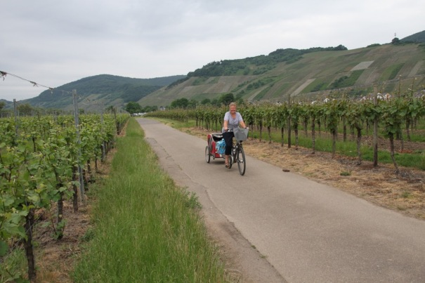 On our first morning we set off along the cycle path through the vines, heading north to Bernkastel-Kues.