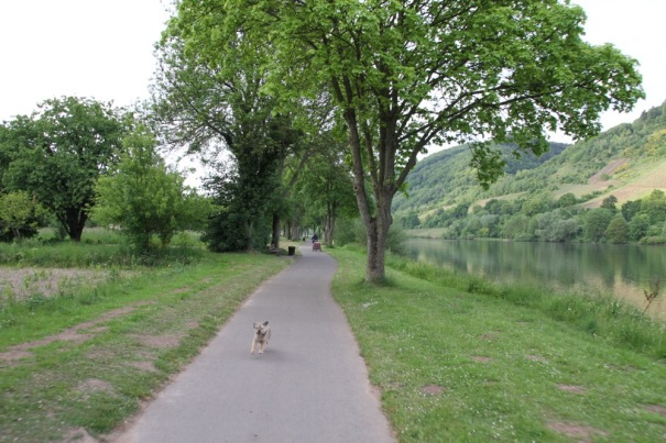 Biking to Alf