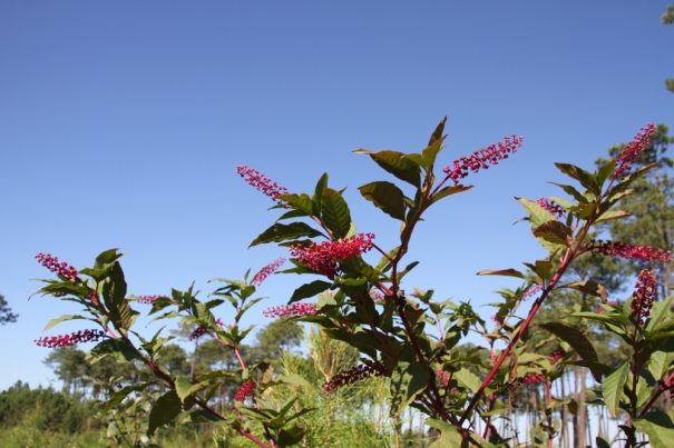 Trackside Flora