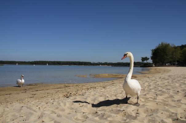 Beach at Sanguinet