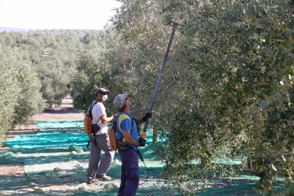 Stripping the Olives