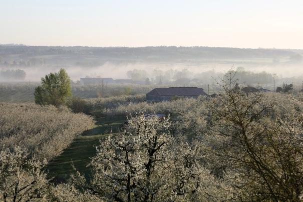 Morning mists at Monteton