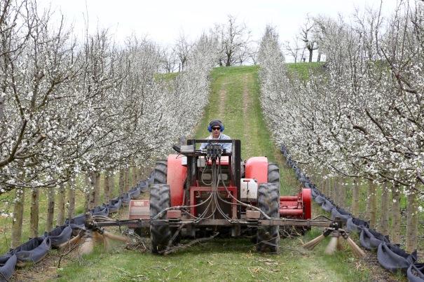 Orchard at Monteton